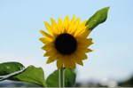 Flower_2008_85