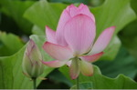 Flower_2008_87