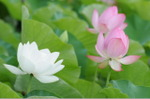 Flower_2008_88