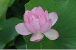 Flower_2008_89