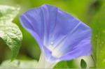 Flower_2008_92