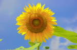Flower_2008_94