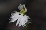 Flower_2008_95