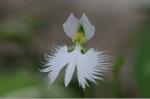 Flower_2008_96