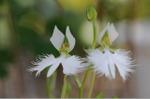 Flower_2008_97