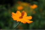Flower_2008_0100
