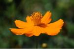 Flower_2008_99