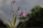Flower_2008_0101