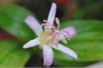 Flower_2008_0104