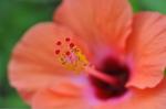 Flower_2008_0105