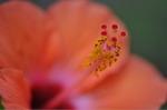 Flower_2008_0106
