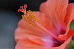 Flower_2008_0107