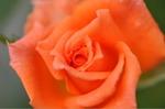 Flower_2008_0108