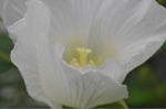 Flower_2008_0109