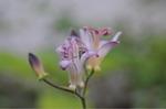 Flower_2008_0110