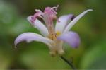 Flower_2008_0112