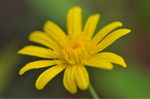Flower_2008_0113