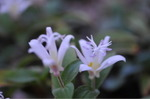 Flower_2008_0116