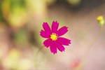 Flower_2008_0121