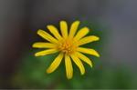 Flower_2008_0123