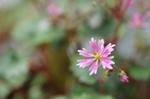 Flower_2008_0125