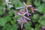 Flower_2008_0126