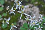 Flower_2008_0127