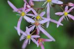 Flower_2008_0130