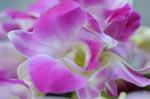 Flower_2008_0134