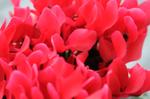 Flower_2008_0136