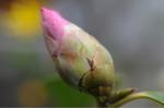 Flower_2009_002
