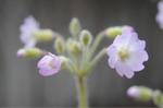 Flower_2009_003