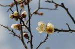 Flower_2009_005