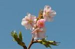 Flower_2009_006