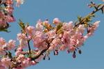 Flower_2009_007