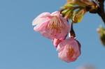 Flower_2009_008