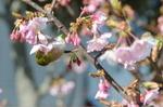 Flower_2009_009