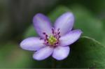 Flower_2009_010