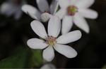 Flower_2009_011