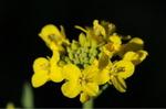 Flower_2009_015