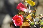 Flower_2009_016