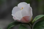 Flower_2009_018