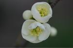 Flower_2009_019