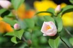 Flower_2009_020