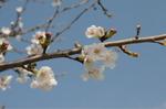 Flower_2009_023