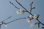 Flower_2009_024