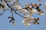 Flower_2009_025
