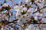 Flower_2009_026