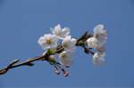 Flower_2009_028