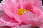 Flower_2009_029
